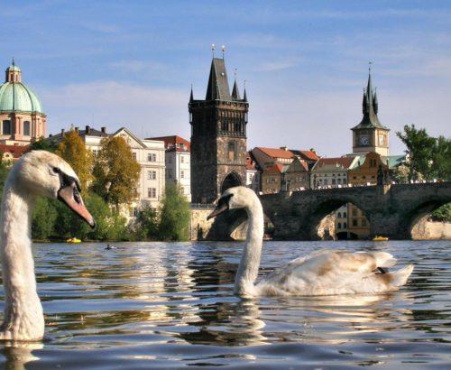 Улюблена парочка: Прага та Дрезден!