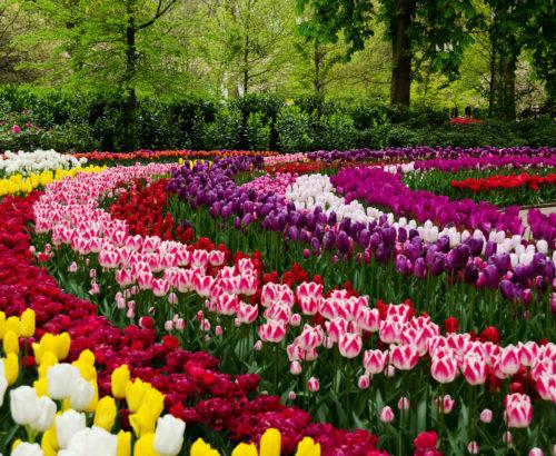 Тур в королівський парк квіткової розкоші/Без нічних переїздів