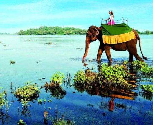 Екскурсійний тур до Шрі- Ланки!